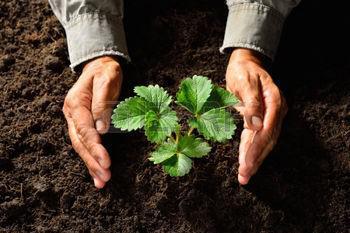 Plano de intervenção ambiental